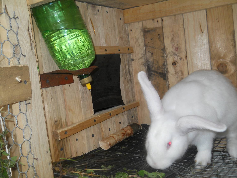 Как сделать клетки для кроликов