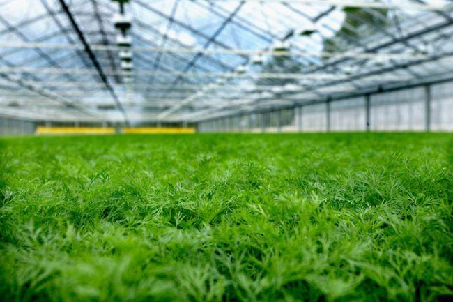Освещение для выращивания зелени 603