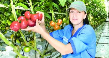 Технология выращивания